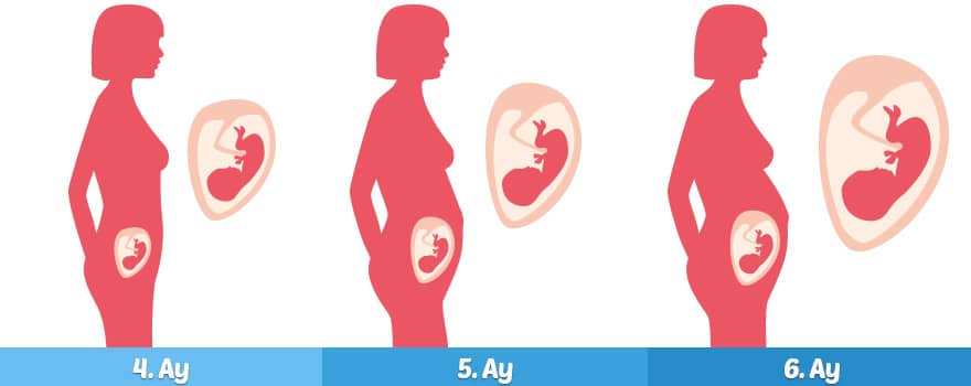 Hamileliğin ikinci 3 Ayı