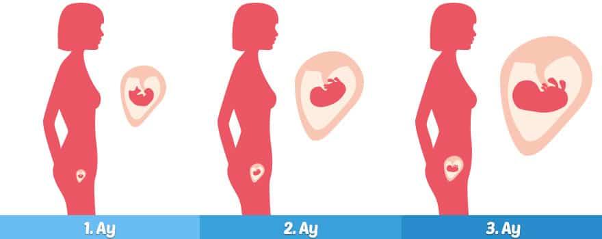 Hamileliğin ilk 3 ayı